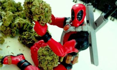 Marvel légalise la weed : ça veut dire quoi au juste ?