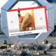 Des pierres des sculptures de PNL en ventes sur Leboncoin