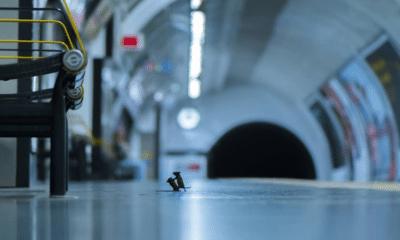 L'histoire derrière ce combat de souris, meilleur photo animalière du monde