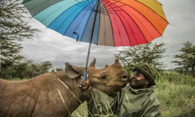 Le BigPicture Natural World Photography est une compétition de photographie mettant en exergue la beauté de la faune et de la flore. Cette édition 2020 regorge de clichés spectaculaires.
