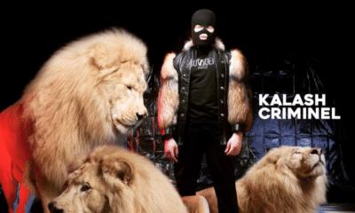 kalash criminel la fosse aux lions
